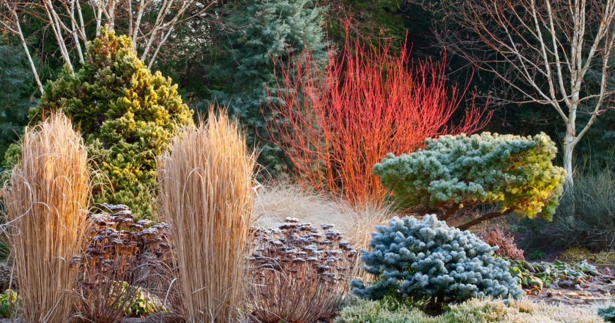 Come realizzare il giardino d 39 inverno - Il giardino d inverno ...