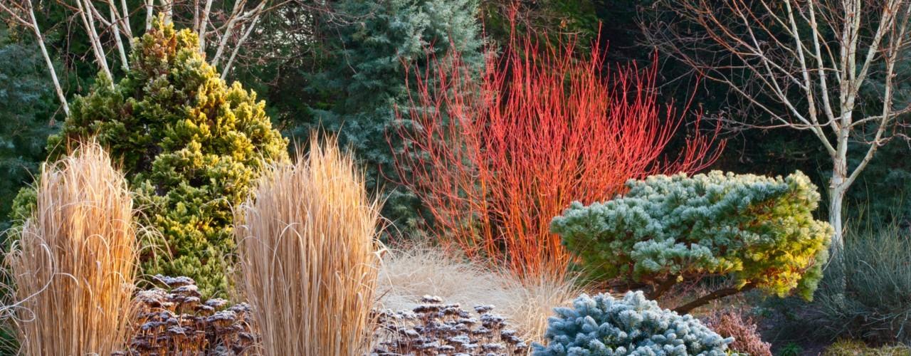 come realizzare il giardino d 39 inverno