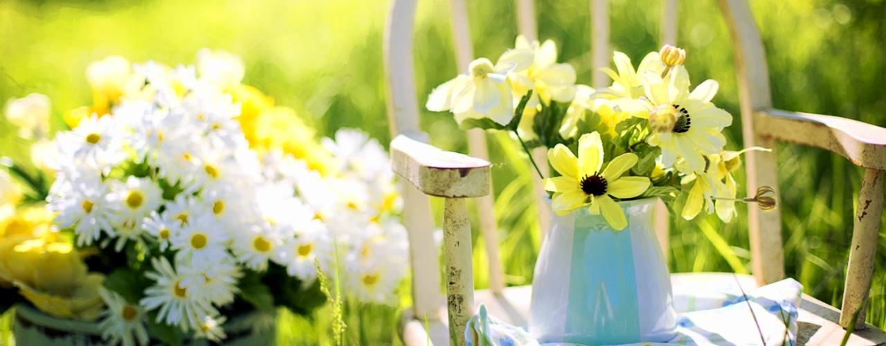 Giardino di fiori gialli