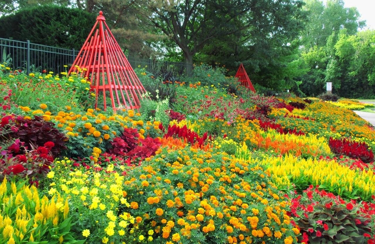 10 fiori gialli per dare luce al giardino for Giardino fiori