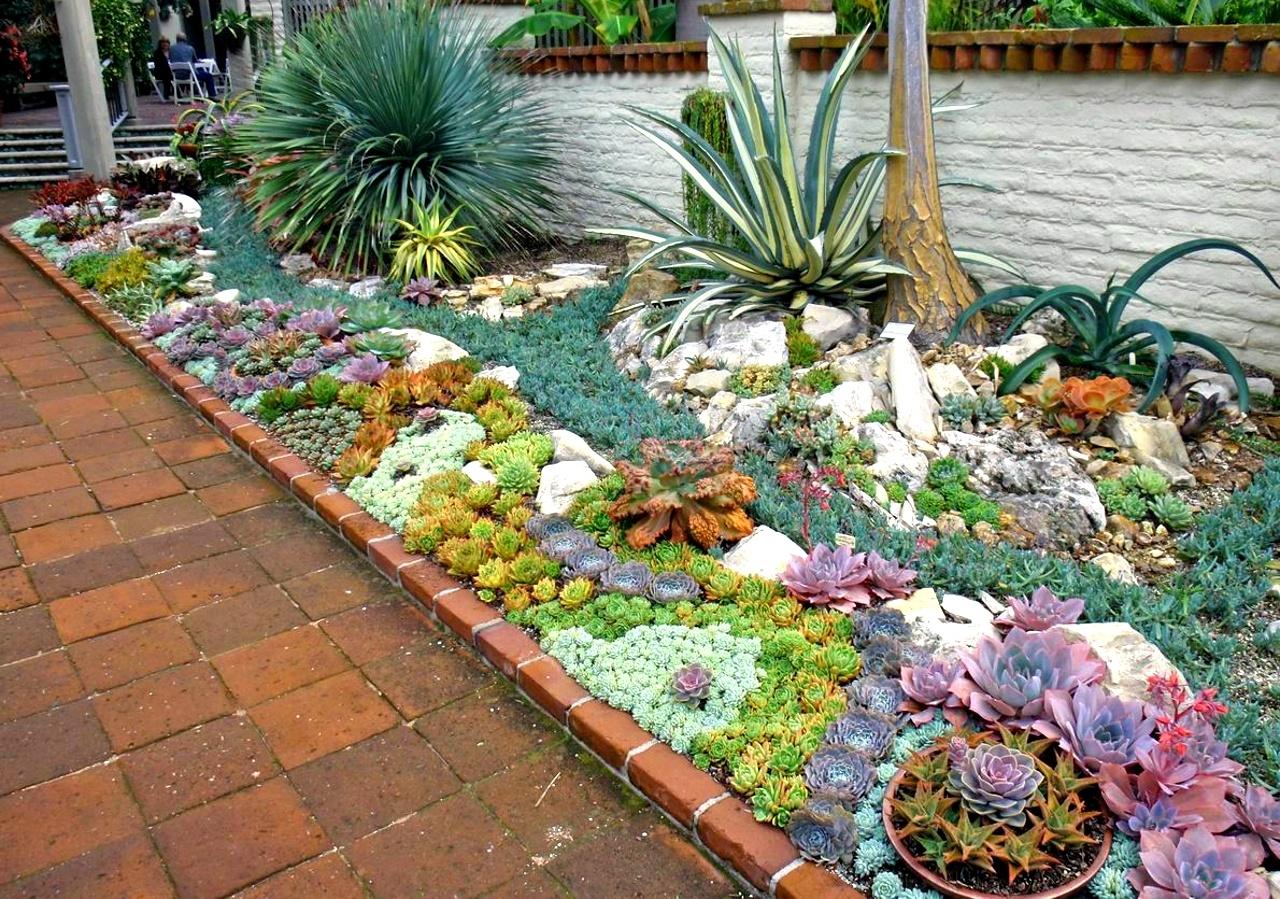 Giardino di cactus e piante grasse a schema ordinato