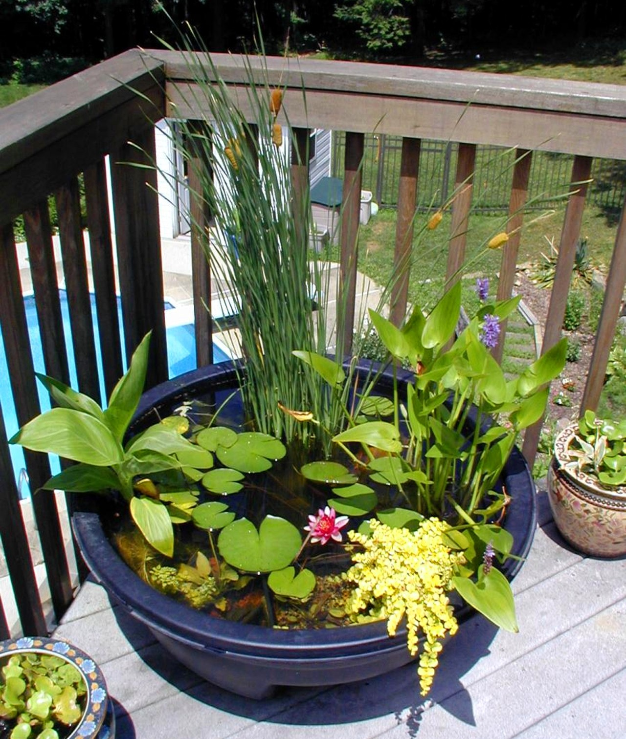 Piccolo stagno artificiale da giardino